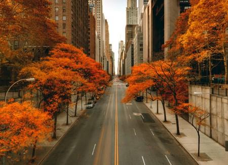 autumn-in-new-york-city-thumb